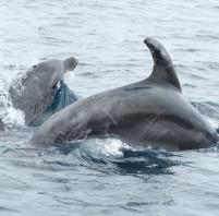 Il santuario dei mammiferi marini